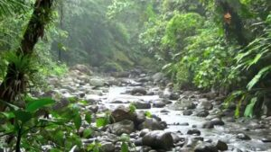 Guadeloupe - rivier